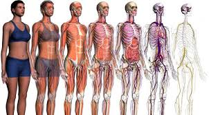 Anatomia y Fisiología para Naturópatas